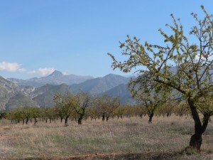 Almond grove near Dílar